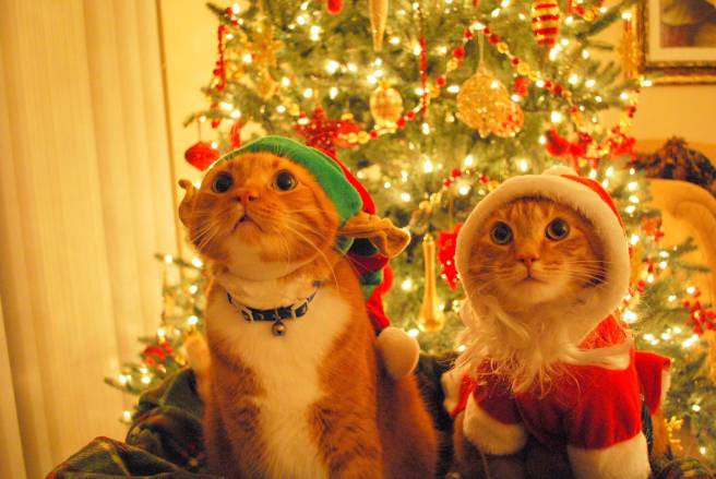 Two cats in front of a Christmas tree